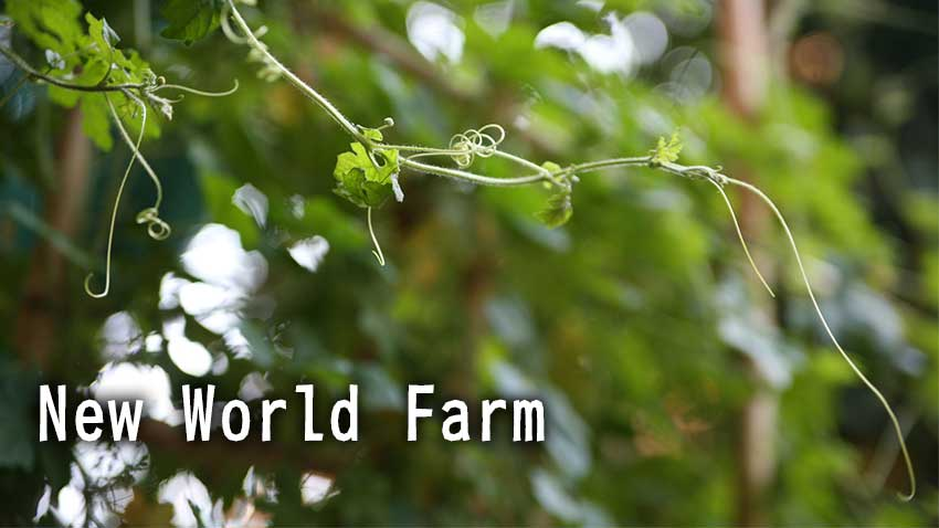 new world farm in cambodia